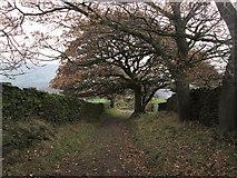 SE0950 : Lane near High Lathe by John Slater