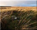 ND2744 : Shieling site near Camster, Caithness by Claire Pegrum