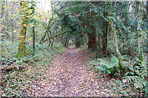 SX3158 : Path through Bake Wood by jeff collins