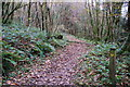 SX3158 : Path through Bake Wood by jeff collins