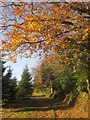 SX3556 : Path, Sconner Down by Derek Harper