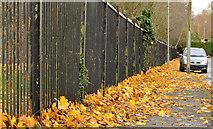 J3673 : Autumn leaves, Orangefield, Belfast (1) by Albert Bridge