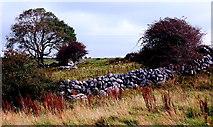 M2300 : Burren - Poulnabrone Dolmen Area - Stone Wall, Field, Bushes & Small Tree by Joseph Mischyshyn
