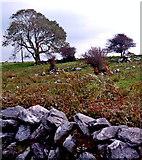 M2300 : Burren - Poulnabrone Dolmen Area - Stone Wall, Field, Bushes & Small Trees by Joseph Mischyshyn