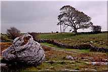 M2300 : Burren - Poulnabrone Dolmeen Area - Large Rock, Farm Road, Walls, Grass, Tree by Joseph Mischyshyn