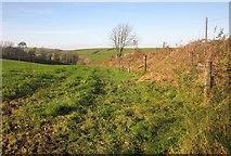 SX3257 : Field by the A387 by Derek Harper