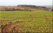 SX3158 : Towards Wilton Farm by Derek Harper