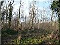 SE4431 : South-east corner, Peckfield Plantation by Christine Johnstone