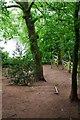 SO8577 : Steps down to footpath, Hurcott Wood, near Kidderminster by P L Chadwick