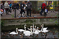 SU1430 : Feeding the swans in Salisbury by Stephen McKay