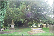 TQ3632 : Yew tree in the churchyard by N Chadwick