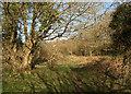 SS8577 : Public footpath in the north of Merthyr Mawr Warren (2) by eswales