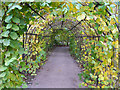 SP0583 : The Hazelnut Tunnel at Winterbourne Botanic Garden by Phil Champion