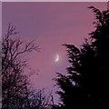 SO9096 : Hazy moon in red-hued skies, Wolverhampton by Roger  Kidd