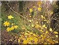 SX9065 : Leaves near St Michael's chapel by Derek Harper