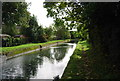 TQ3294 : New River by N Chadwick