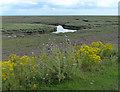 TF4650 : Salt marsh and tidal creeks at Wrangle Flats by Mat Fascione
