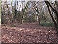 TQ5782 : Brick Kiln Wood by Roger Jones