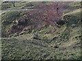 NY9075 : Gunnerton Burn lime kiln - pot (collapsed) by Mike Quinn