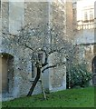 ST9168 : Tree decked out with baubles, Lacock Abbey by Rob Farrow