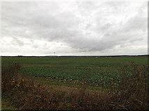 TL2657 : Farmland opposite Leycourt Farm by Adrian Cable