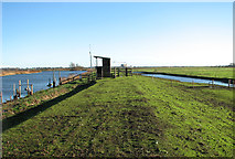 TG3504 : On the Wherryman's Way along the River Yare by Evelyn Simak