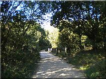 SK5852 : Railway bridge in Sansom Wood by Richard Vince
