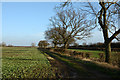 SE4656 : Field edge with track and hedge by Trevor Littlewood