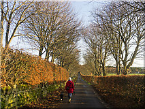 NH6454 : Balnakyle Farm Road - the last stretch of a walk with our dog by Julian Paren