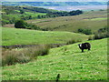 SD1689 : Grazing near Fenwick by Andy Deacon