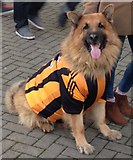 TA0728 : Rex - The Hull City dog by Neil Theasby