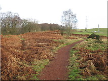 NS5173 : Path to Craigton from Whitehill Farm by G Laird