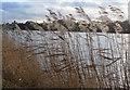 SE7171 : Lakeside reeds by Pauline E
