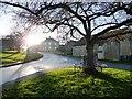 SK8925 : Bench round a tree, Skillington by Christine Johnstone