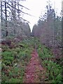 NH6862 : Forest footpath by Richard Dorrell