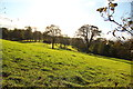 NS4663 : Ferguslie Gardens hill side by david cameron photographer