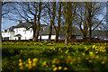 NS4565 : Blackstoun Road  Farm, Paisley by david cameron photographer