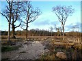 SU6273 : Peatmoor Copse in Winter by Des Blenkinsopp