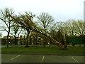 TQ4277 : Fallen tree in Charlton Park (2)  by Stephen Craven