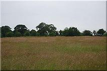 TG1807 : Grassland by N Chadwick