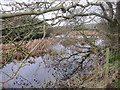 SJ9565 : Reeded pond at Wincle Grange by Dr Duncan Pepper