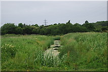 TG1808 : Drainage ditch, Bowthorpe Marsh by N Chadwick