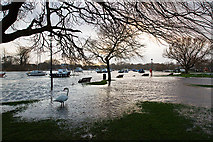 SZ1592 : Jan 2014: flooding at Christchurch Town Quay (2) by Mike Searle