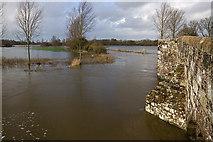 ST9102 : Jan 2014: flooding at Crawford Bridge, Spetisbury (2) by Mike Searle