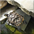 SD4861 : Turtle in the Butterfly House by Gerald England