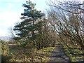 NZ2256 : Bowes Railway Path near Birkland Lane by Oliver Dixon