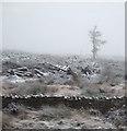 SD7689 : Last tree standing by JThomas