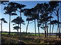 NT6378 : Coastal East Lothian : Early January Near Hedderwick Hill by Richard West