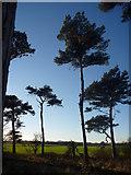NT6378 : East Lothian Landscape : Feeling The Hedderwick Vibe by Richard West
