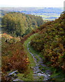 SD2393 : Bridleway Beneath Dunnerdale Fells by Andy Deacon